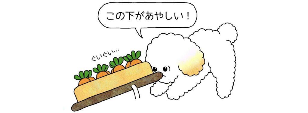 トイプードル にんじん収穫おもちゃ