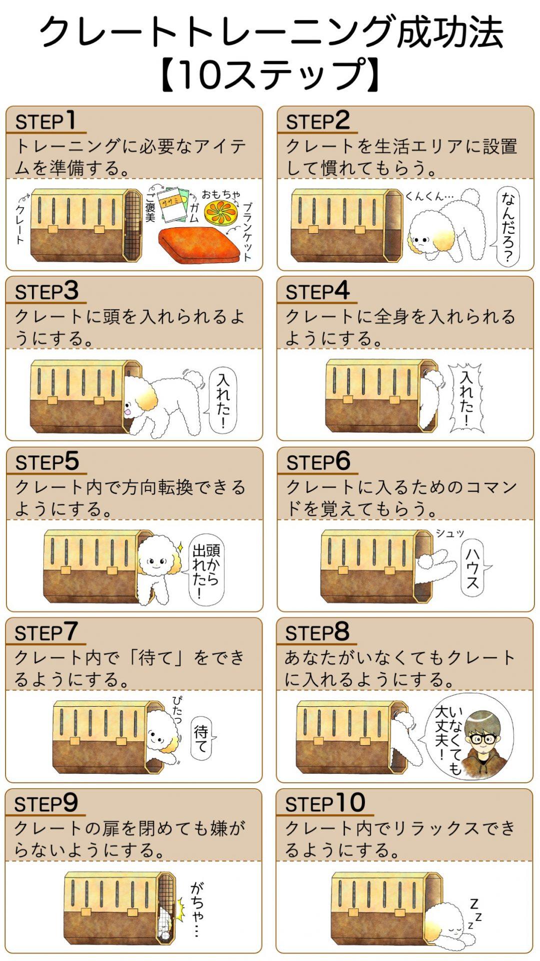 成犬トイプードルが成功したクレートトレーニング方法【10ステップ】